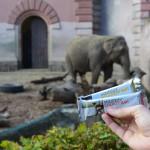 Batony energetyczne i regeneracyjne – test Squeezy