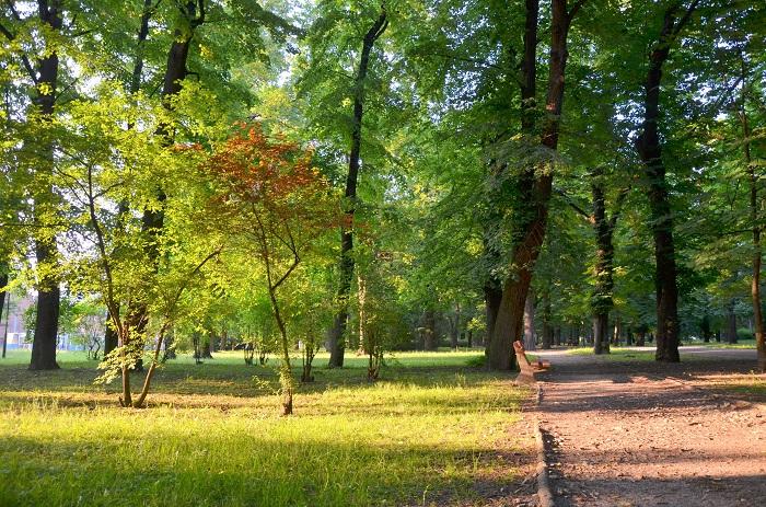 bieganie po parku