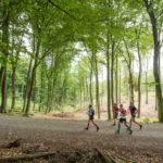 Ultramaraton, maraton i półmaraton podczas TriCity Trail