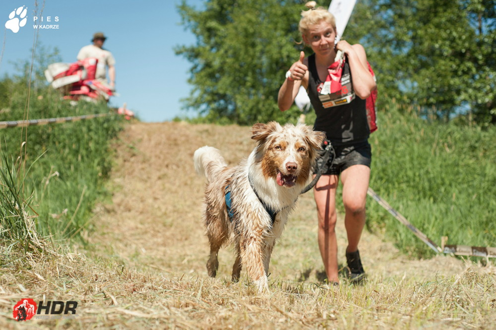 Hard Dog Race, czyli bieganie, przeszkody i psy